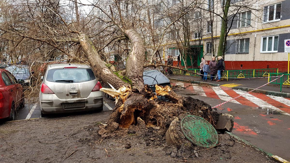 падения деревьев на машины