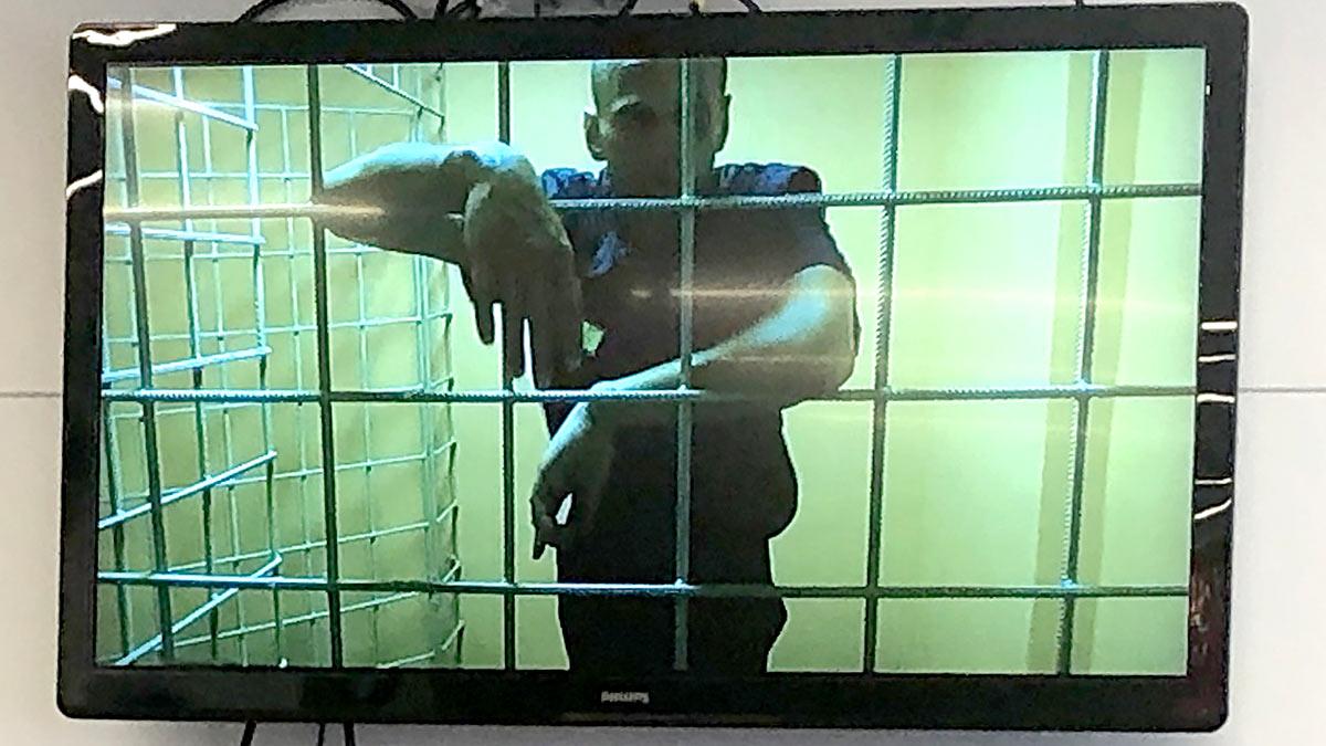 Алексей Навальный на экране во время заседания Преображенского суда