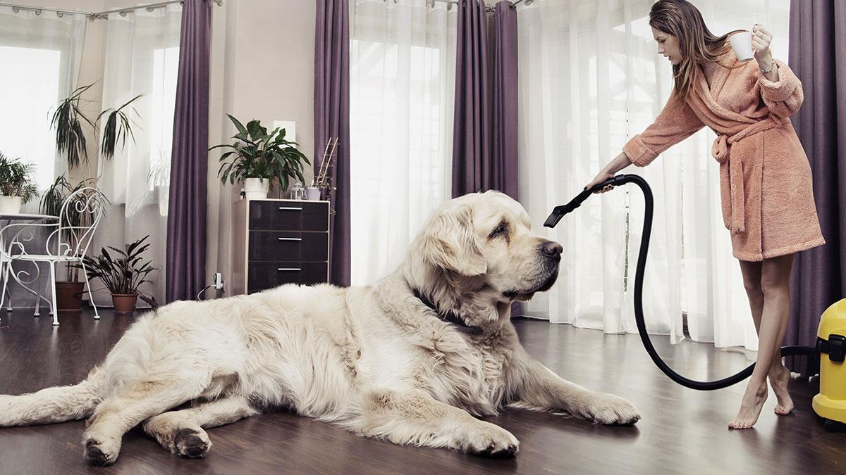большая белая собака и хозяйка с пылесосом