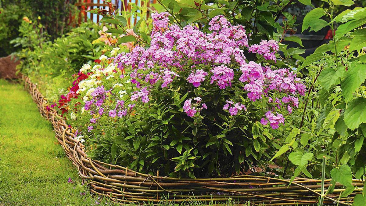 цветы в огороде дача сад растения