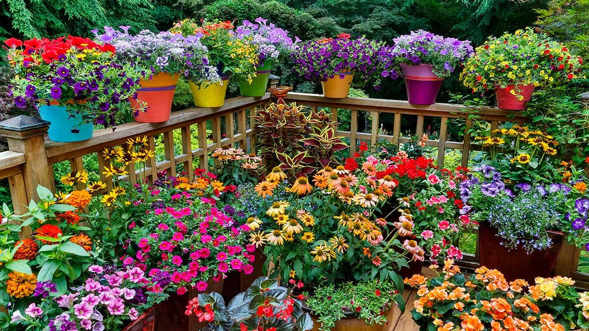 дача много цветов деревья