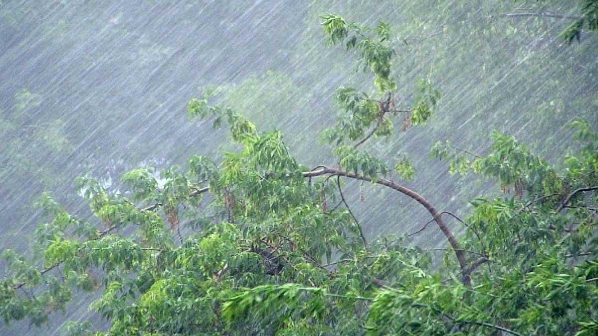 дождь ветер деревья гнутся