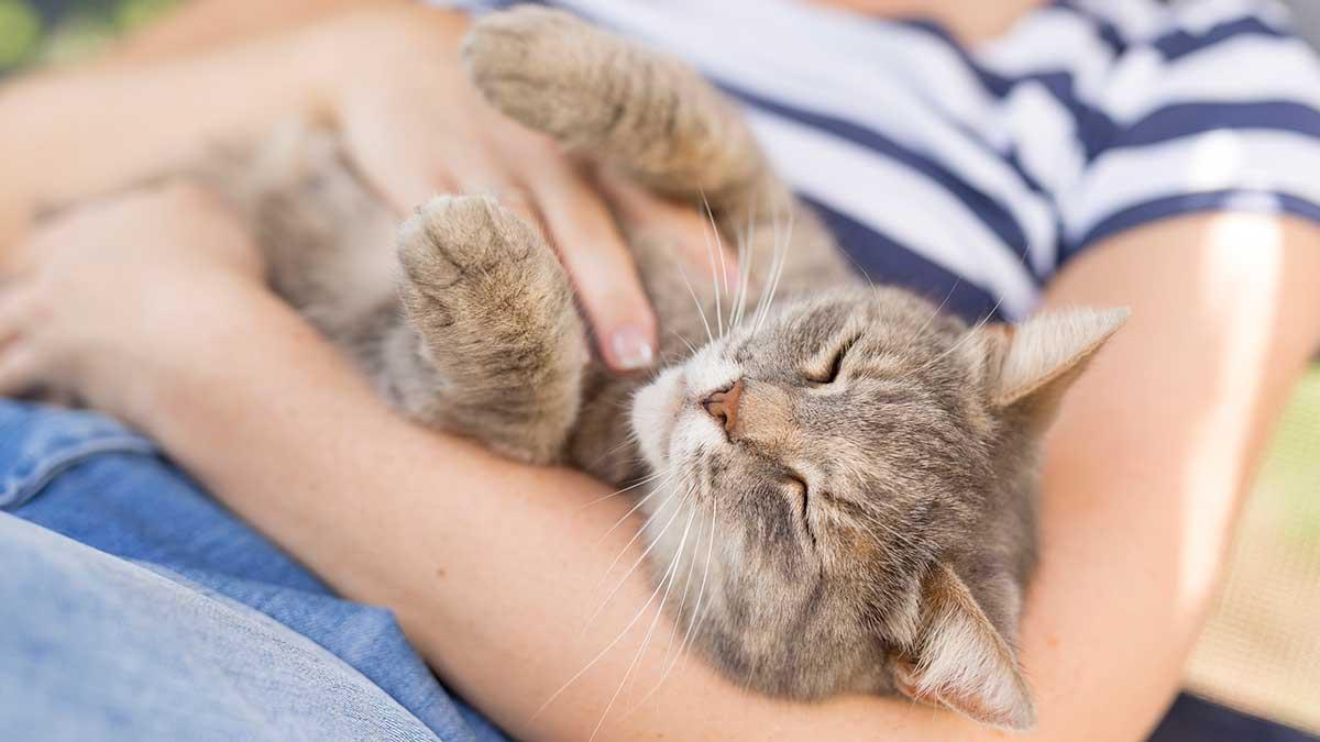 кошка сидит на руках