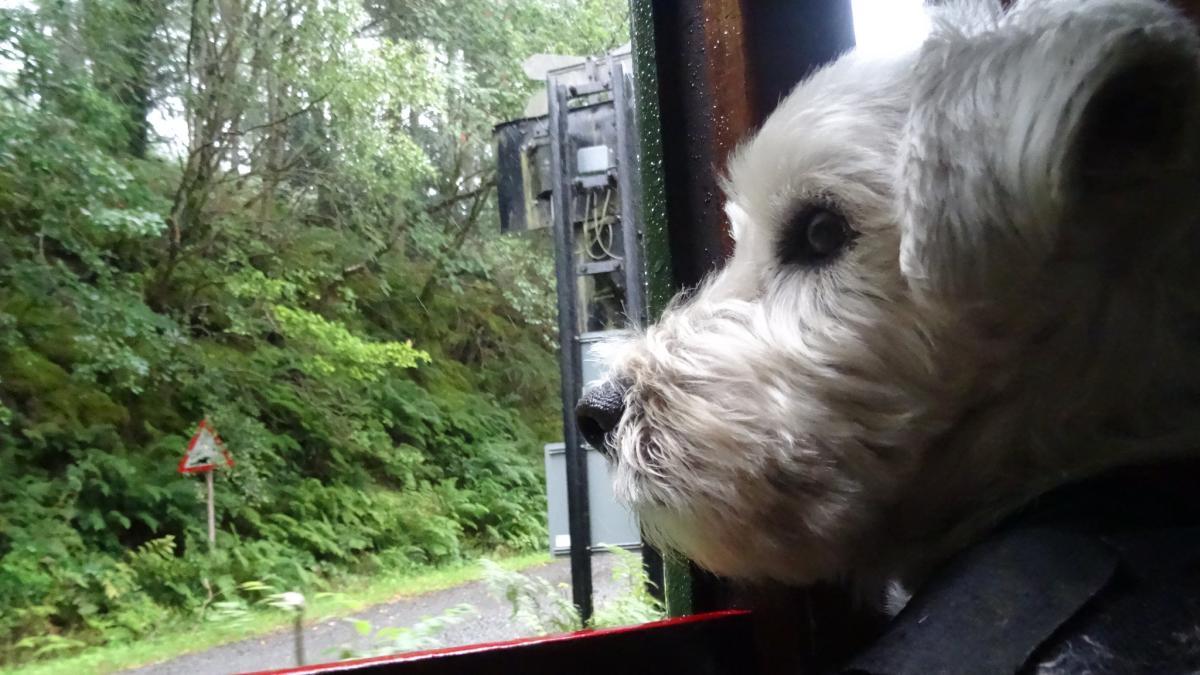 собака на поезде