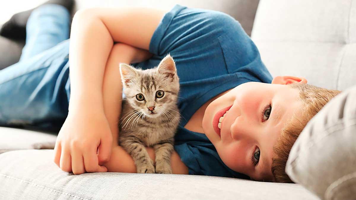 котенок и мальчик