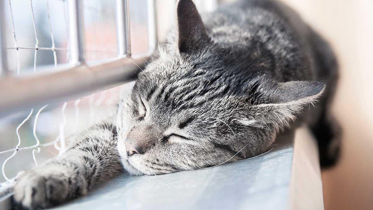 ленивая кошка спит