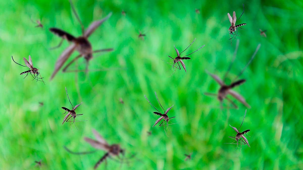 летает много комаров