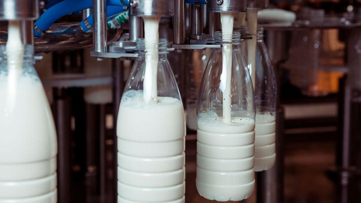 розлив производство коровьево молока фабрика завод