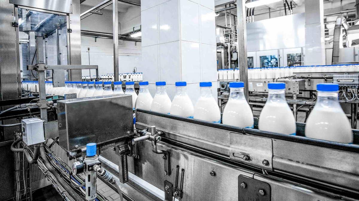 молоко производство молока конвейер