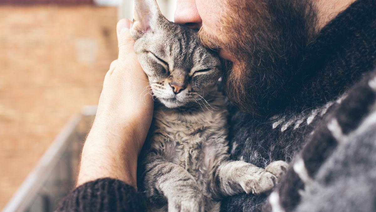 мужчина с бородой и кошка с усами