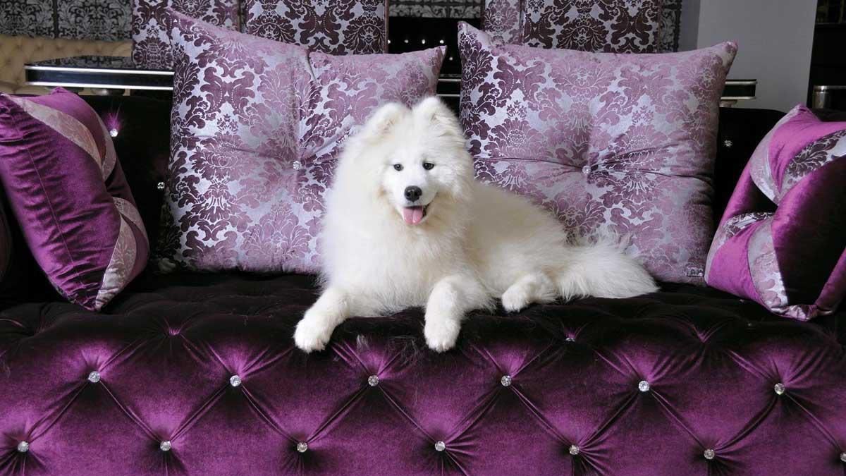 пушистая собака сидит на красивом диване