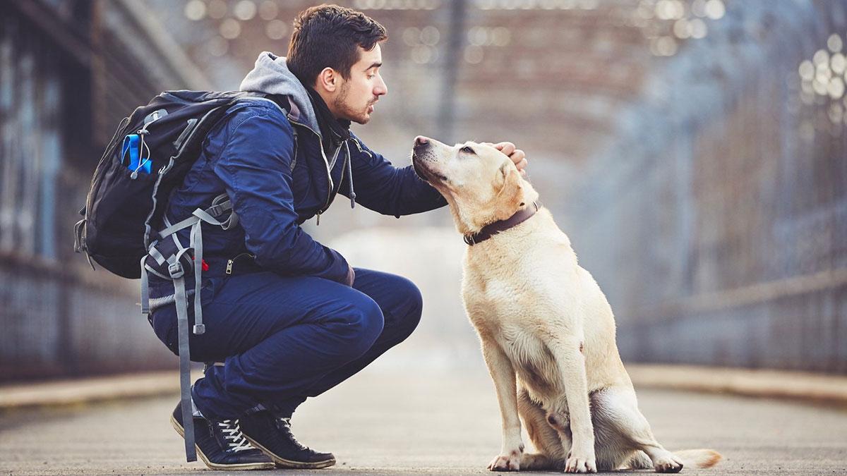 самые верные собаки