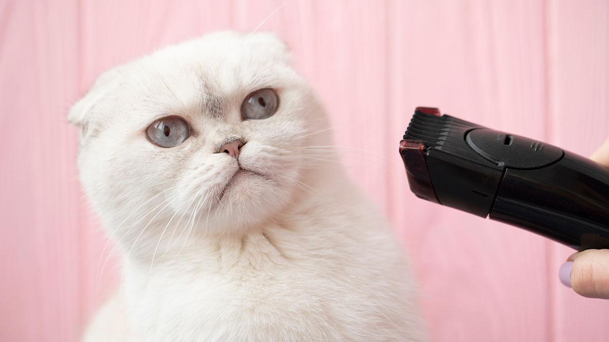 кошка и машинка для стрижки