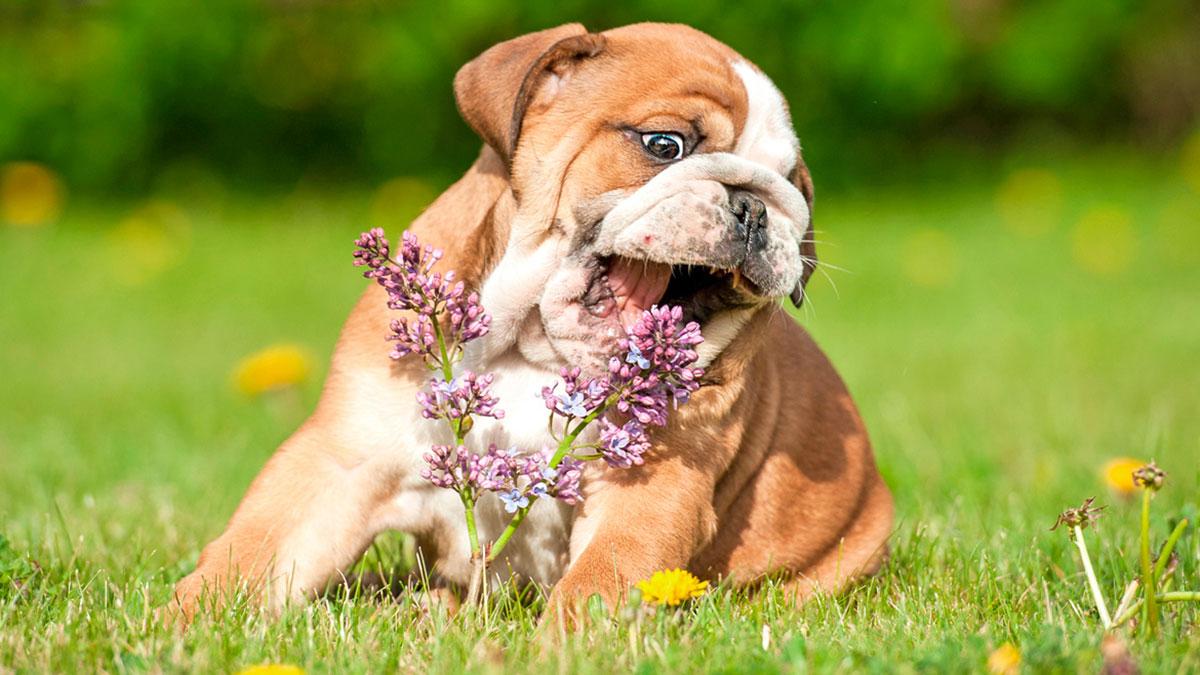 собака щенок ест цветок
