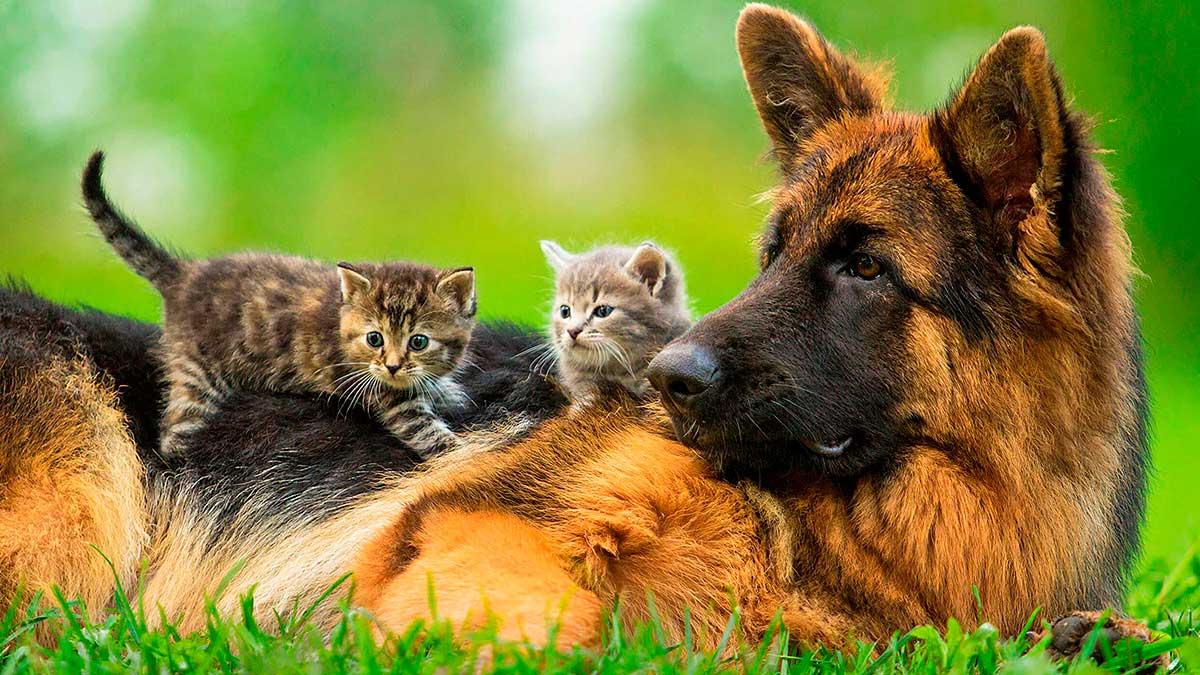 собака сидит с котятами
