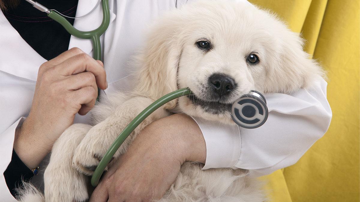 собака на руках у доктора ветеринара