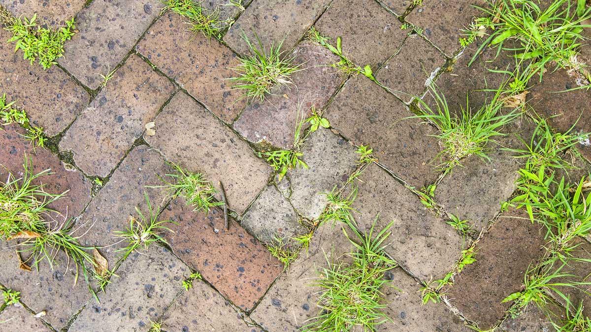 сорняки между плитками дорожки