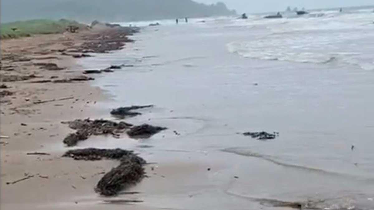 водоросли Сахалин нефть берег песок