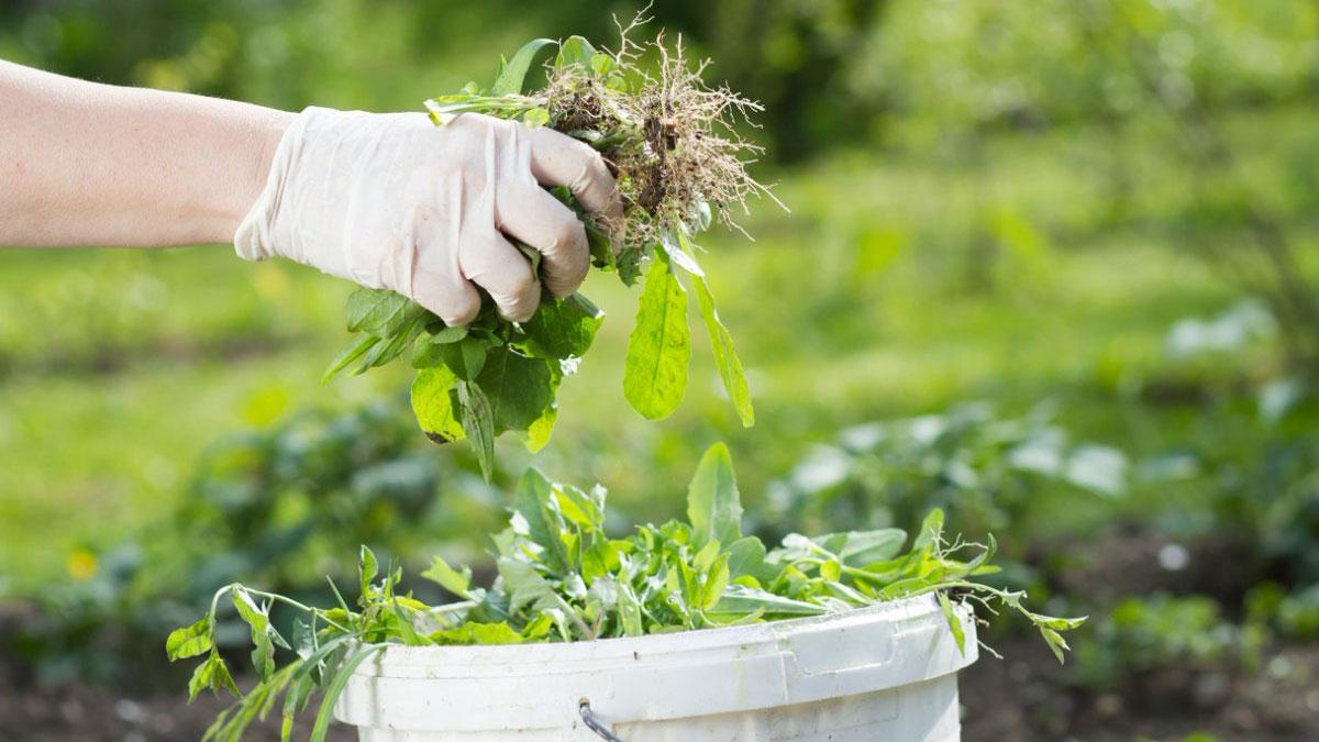 сорняки пропалывание ведро огород