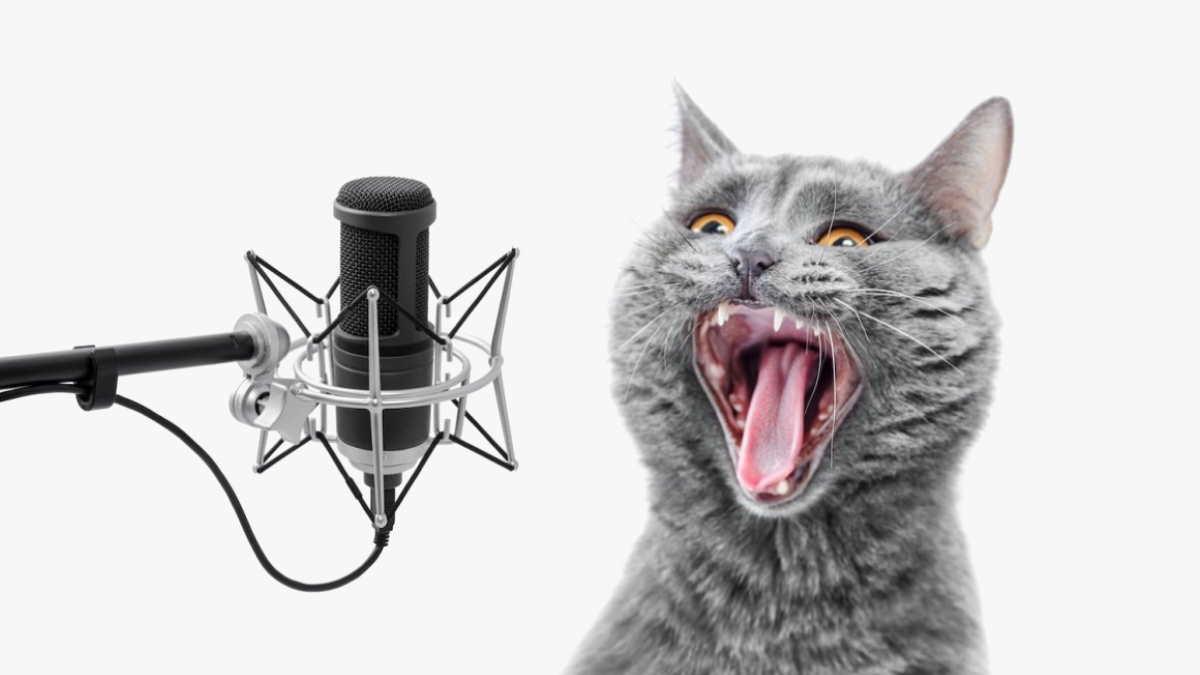 Кричащая кошка микрофон