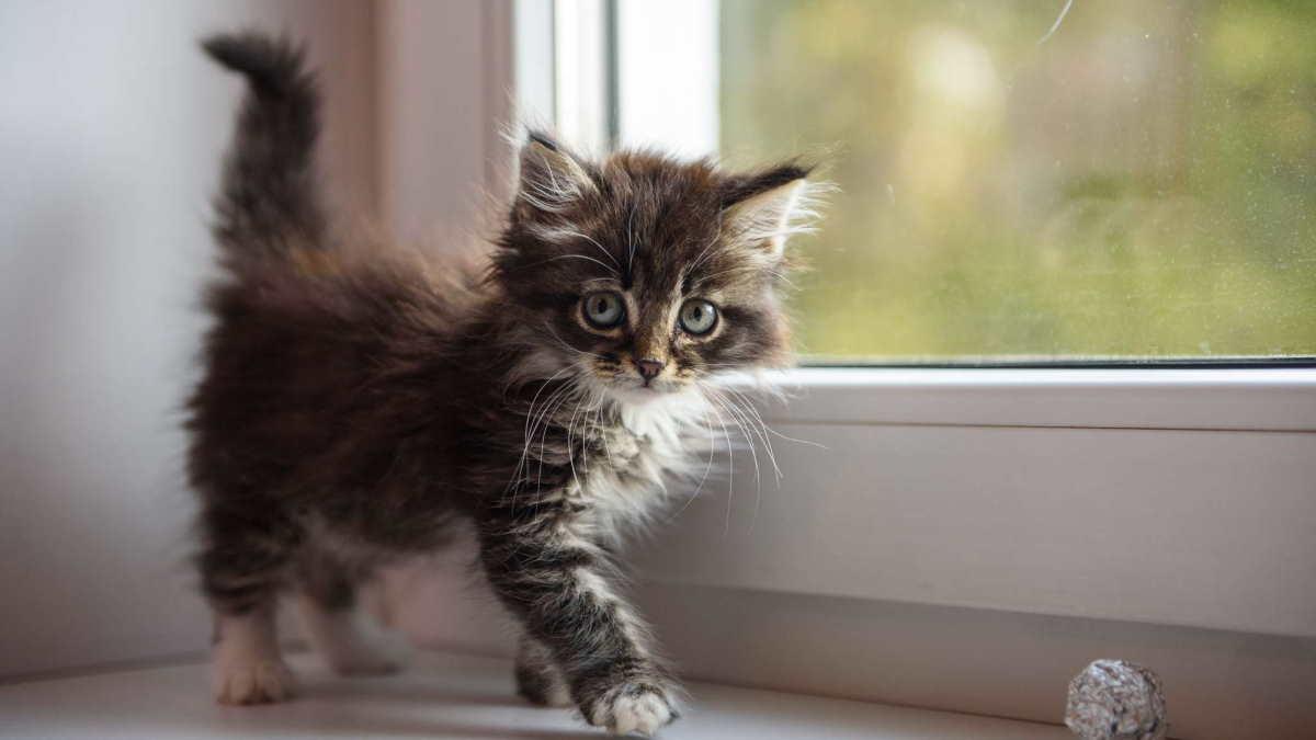 Котёнок на подоконнике
