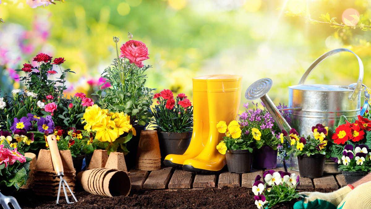 Садоводство цветы