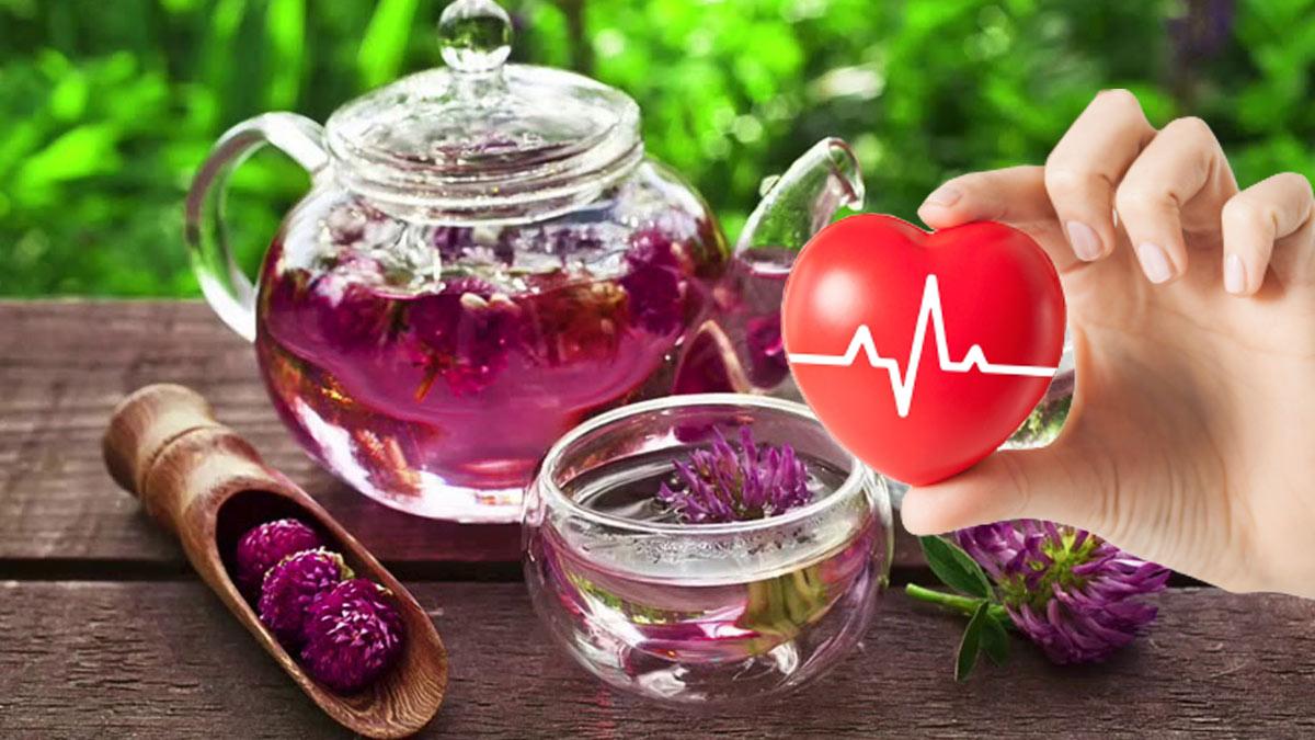 чай из клевера здоровое сердце