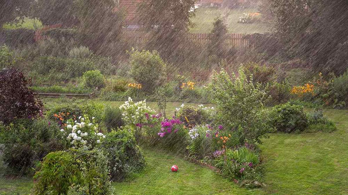 дождь на дачном участке