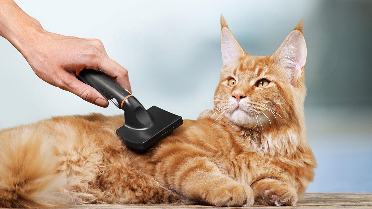 Кошка уход за шерстью