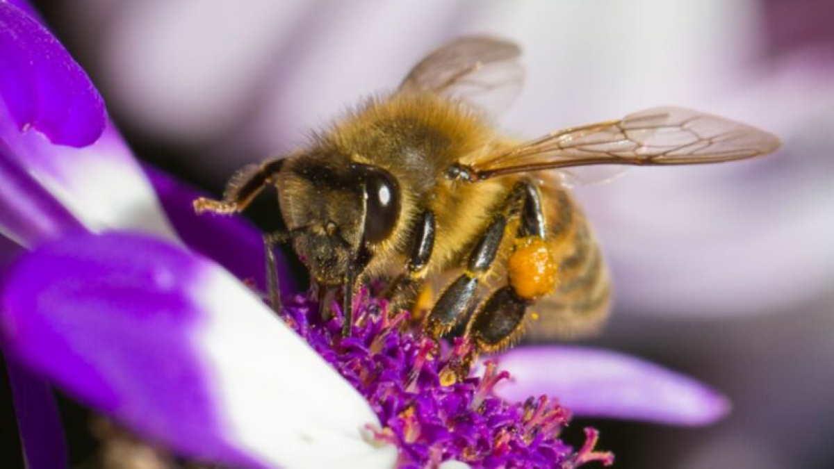 Пчела на цветке