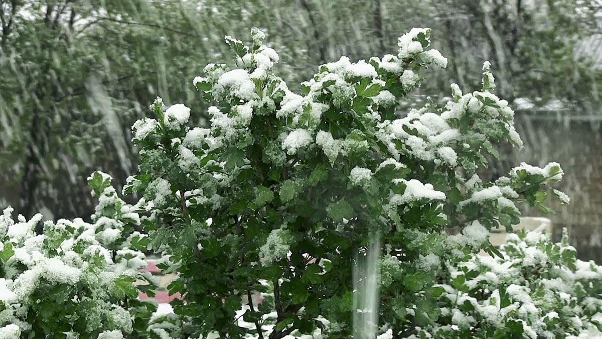 Мокрый снег летом