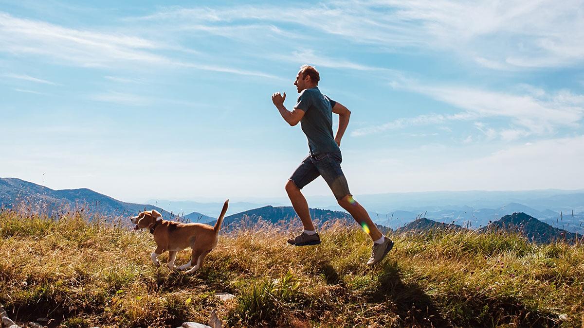 собака и человек бегут