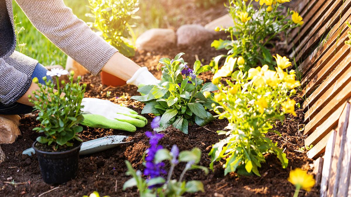женщина сажает цветы в саду
