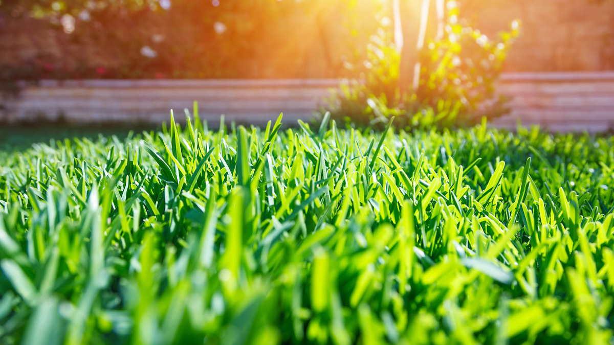 Лето газон