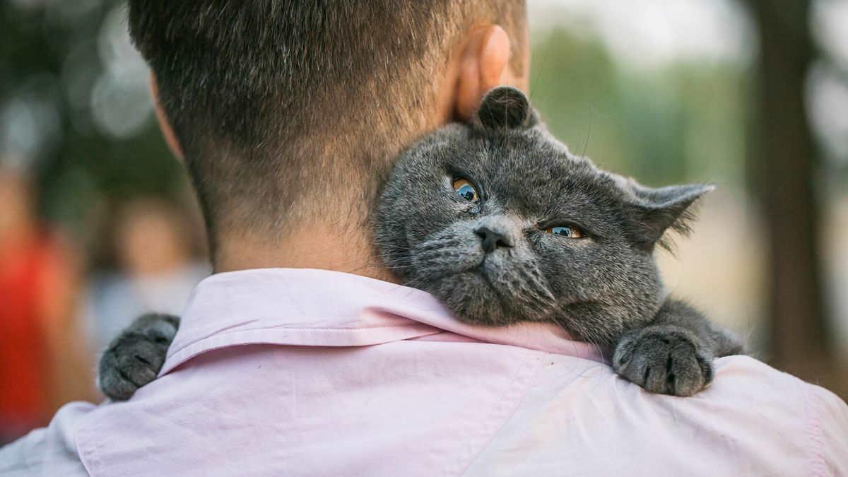 Кошка на руках хозяина