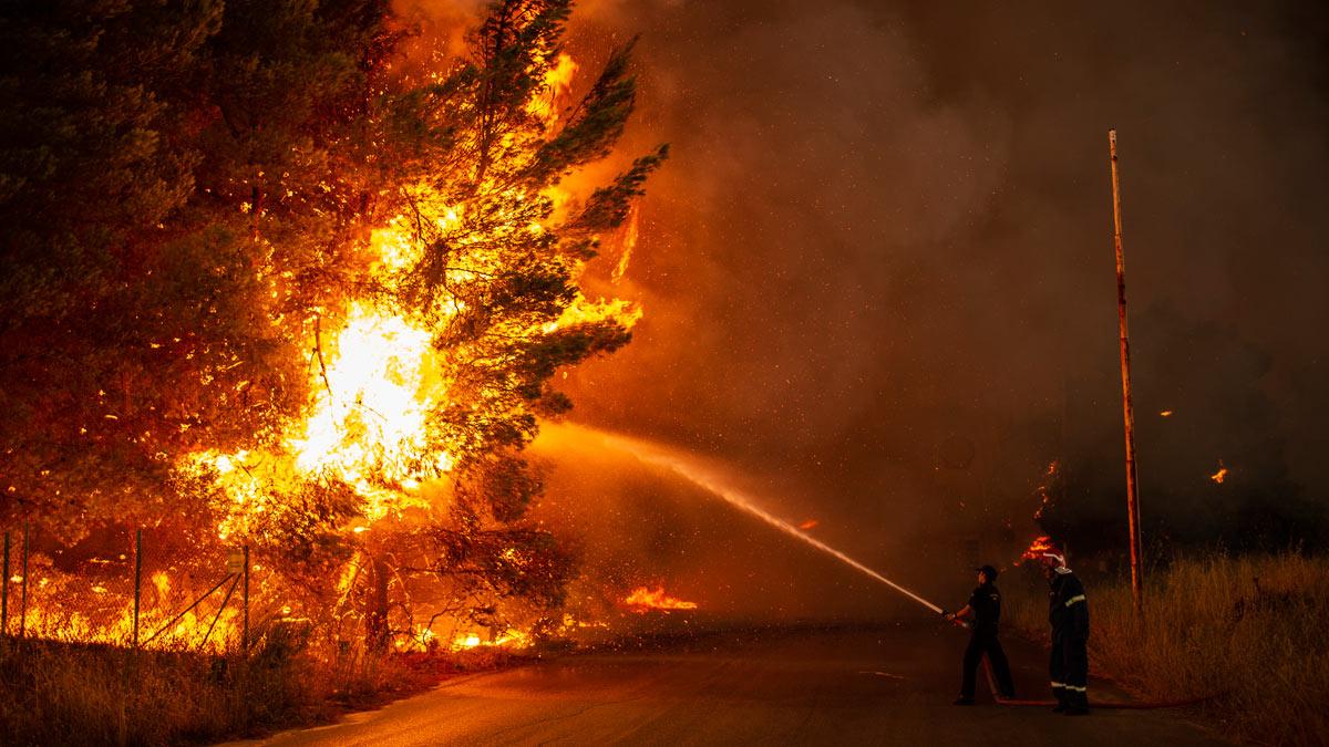 Лес дерево пожар