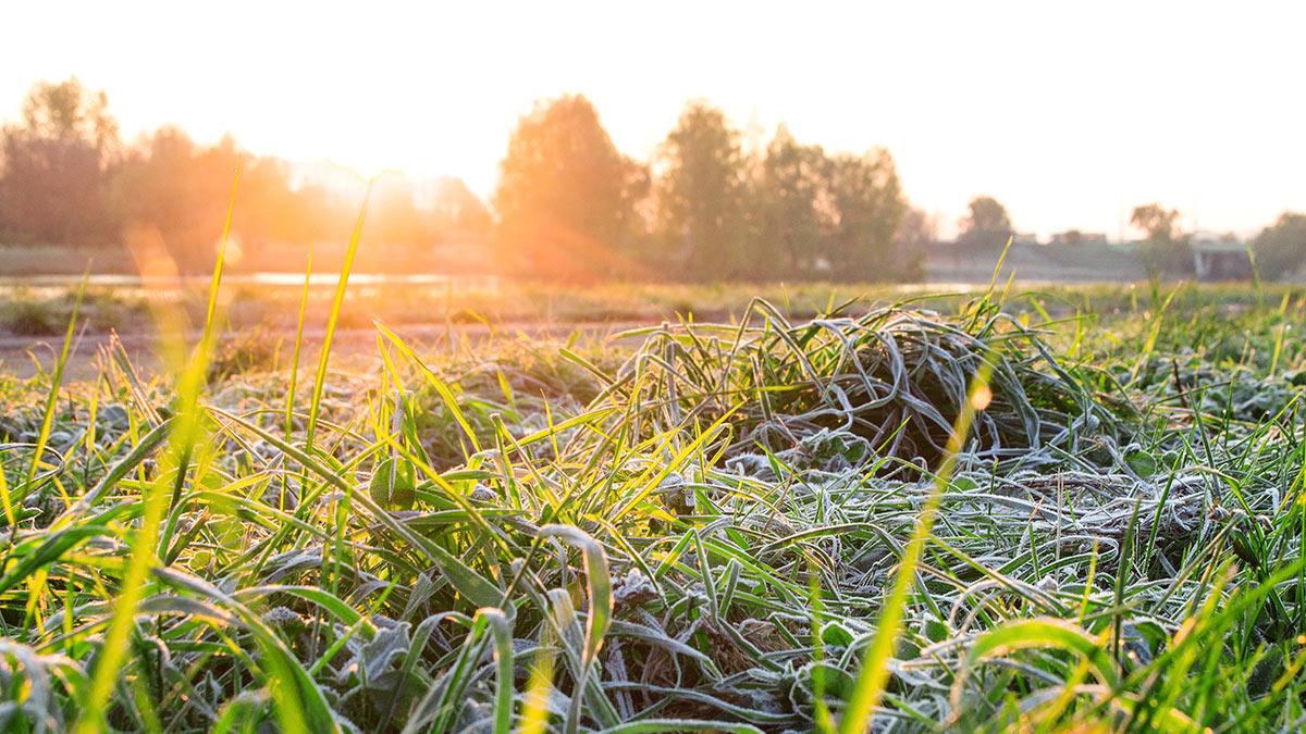 Утренние морозы на траве