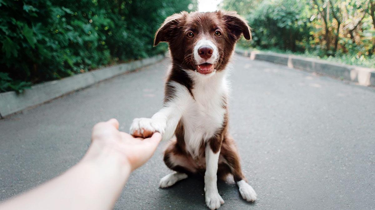 собака на улице дает лапу