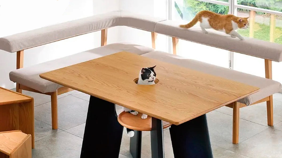 кошки дырка стол