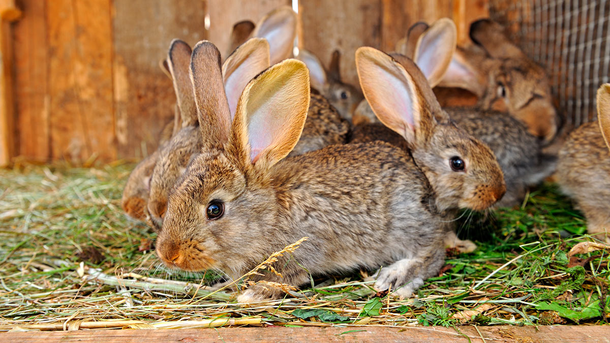 кролики дома в клетке