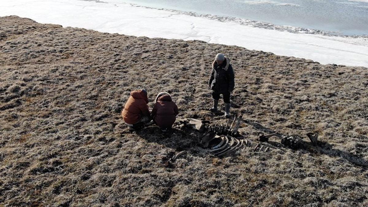 Кости мамонта