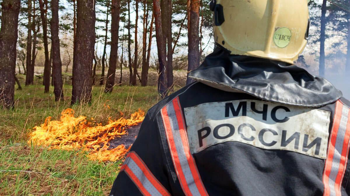мчс пожар в лесу