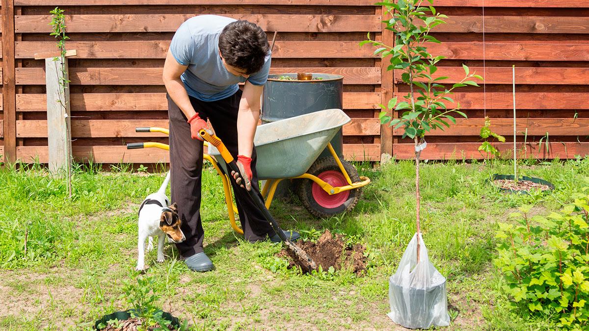 мужчина сажает деревья