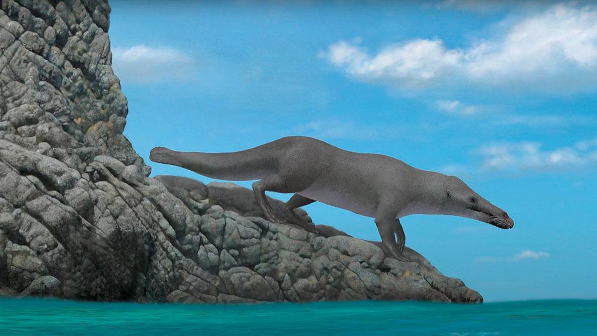 окаменелость кита