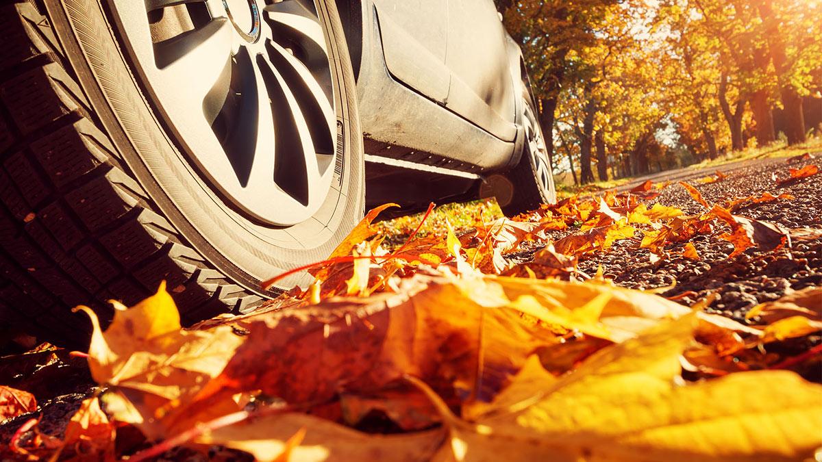 осень автомобиль