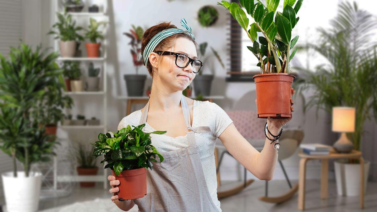 горшки с комнатными растениями