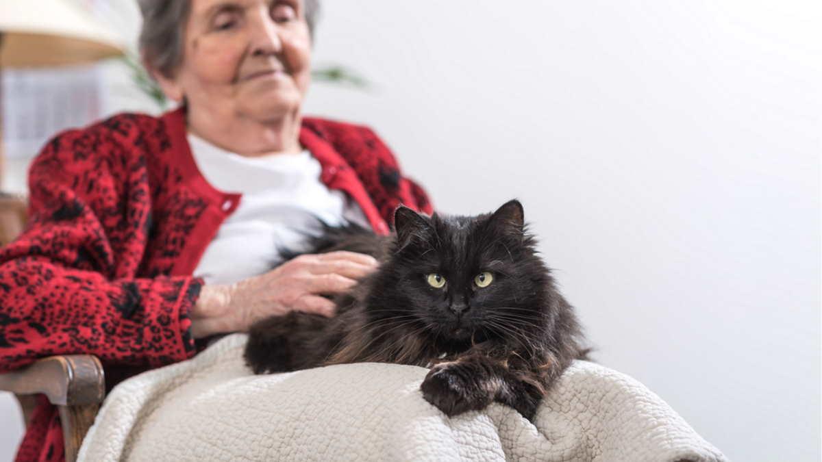 кошка на руках пожилой женщины