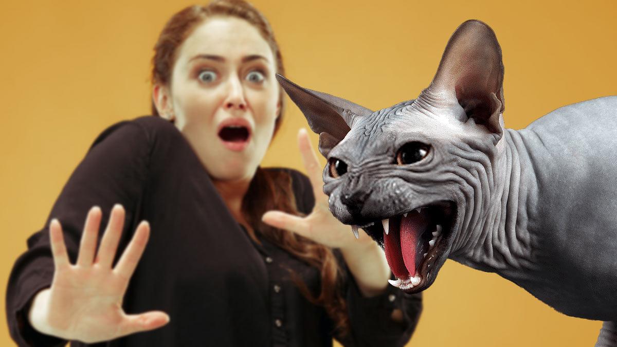 злопамятная кошка