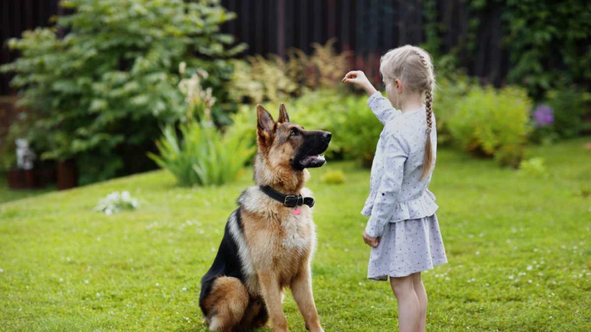 Девочка дрессирует собаку