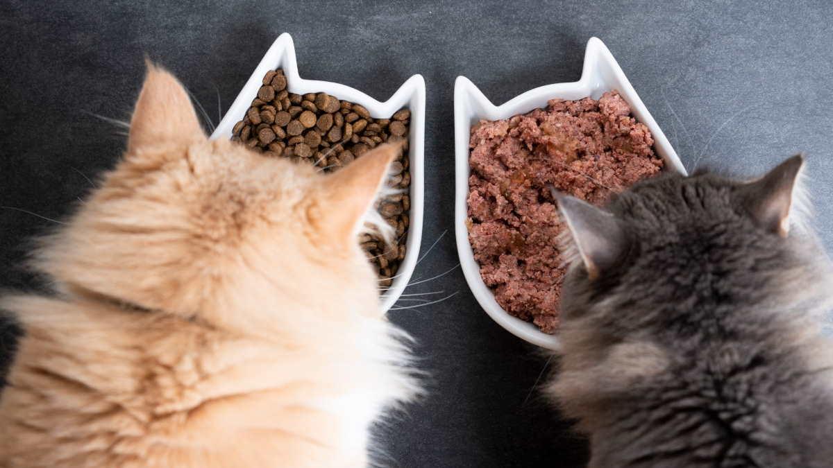 кошки едят корм